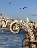 Fiskmås som poserar i port av Istanbul royaltyfria foton