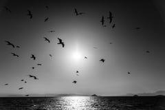 Fiskmåsar över Meden Fotografering för Bildbyråer