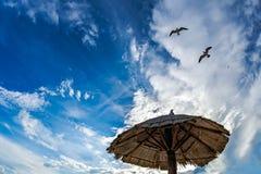 Fiskmåsar i skyen royaltyfri fotografi