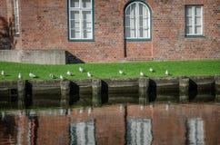 Fiskmåsar på gräsmattan i den Luebeck staden royaltyfri foto