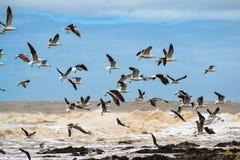 Fiskmåsar på kusten Royaltyfri Bild