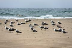 Fiskmåsar på kusten Royaltyfri Fotografi
