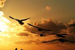 Fiskmåsar på kusten på solnedgång 5 Royaltyfri Bild