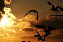 Fiskmåsar på kusten på solnedgång 4 Arkivbild