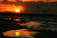 Fiskmåsar på kusten på solnedgång 11 Royaltyfri Foto