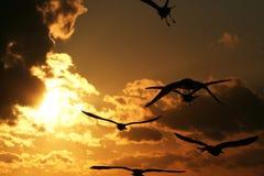 Fiskmåsar på kusten på solnedgång 6 Arkivbild