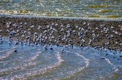 Fiskmåsar på strand Arkivfoton
