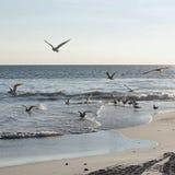 Fiskmåsar på stranden Arkivbild