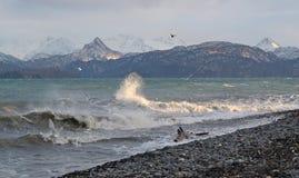 fiskmåsar som plaskar waves royaltyfri bild