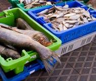 fiskmarknad Arkivbild