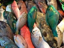 Fiskmarknad, Alona Beach, Panglao Filippinerna Royaltyfri Fotografi