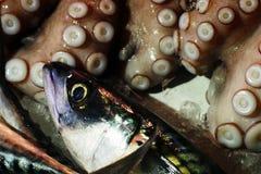 Fiskmarknad - atlantisk makrill (Scomberscombrus) och bläckfisk (den vulgaris bläckfisken) royaltyfri fotografi
