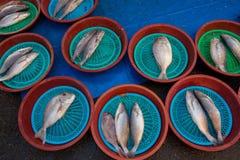 Fiskmarknad av Busan/Sydkorea Arkivbild