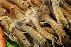 Fiskmarknad - bönsyrsaräka (Squillabönsyrsor) Arkivfoton