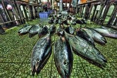 Fiskmarknad i Aden Royaltyfri Fotografi