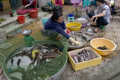Fiskmarknad i Can Tho, Vietnam arkivbild