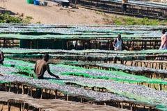 Fiskmarknad i Malawi Royaltyfri Fotografi
