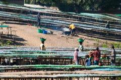 Fiskmarknad i Malawi Arkivbilder