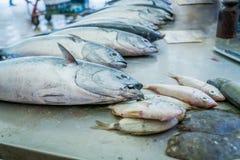 Fiskmarknad i splittring, Kroatien Royaltyfri Bild