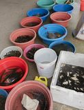 Fiskmarknad i i stadens centrum Hanoi royaltyfria bilder