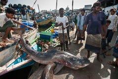 Fiskmarknad i Yemen Arkivbild