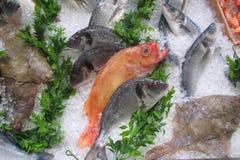 Fiskmarknad - materielbild Royaltyfri Foto