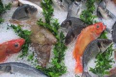 Fiskmarknad - materielbild Royaltyfria Foton