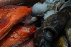 Fiskmarknad Panama City Arkivbild