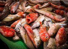 Fiskmarknad 1, Spanien Royaltyfria Bilder
