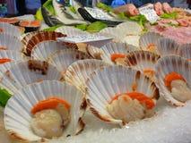 fiskmarknad venice Royaltyfri Fotografi