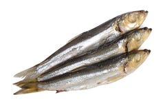 Fiskmat   Fotografering för Bildbyråer