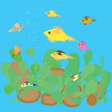 Fiskmatning i akvariet Arkivbild