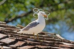 Fiskmås som fångas i plast- Royaltyfri Foto