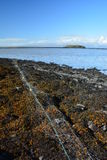 Fisknät i den icelandic kusten Arkivbilder
