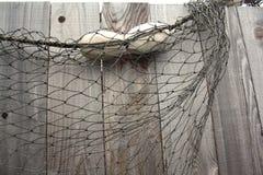 Fisknät på staketet Royaltyfria Bilder