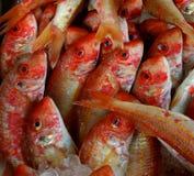 fiskorange Arkivbild