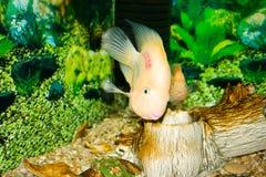 fiskpapegoja royaltyfri foto