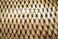 fiskscale arkivbild