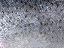 fiskscales Royaltyfri Foto