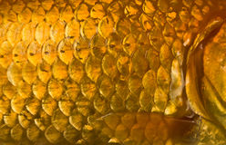 fiskscales Arkivfoto