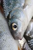 fiskscales Royaltyfria Bilder