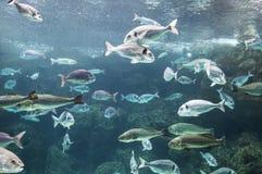 Fisksimning i behållare Royaltyfri Bild
