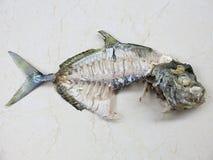 Fiskskelett Ben av den tropiska fisken arkivfoto