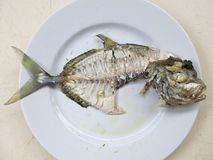 Fiskskelett p? en platta Ben av den tropiska fisken royaltyfri foto