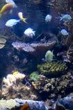 fiskskola royaltyfria foton