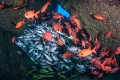 Fiskskolgång i undervattens- grotta royaltyfria bilder