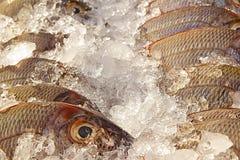 Fiskstand med is och fiskar Fotografering för Bildbyråer