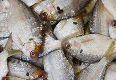 fiskstapel Arkivfoton