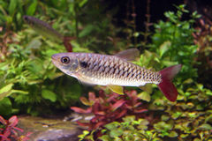 fiskstensucker royaltyfri foto