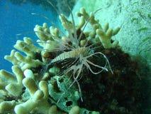 fiskstigningssun Royaltyfria Bilder